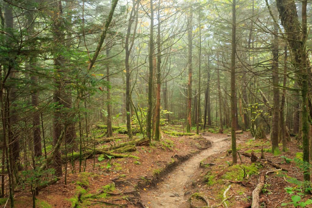 A trail winds through Great Smoky Mountains National Park